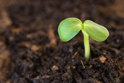 Jesus seeds, sprout!